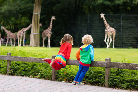 safari animal: Two children, little toddler boy and preschool girl, brother and sister, watching giraffe animals at the zoo on sunny summer day. Wildlife experience for kids at animal safari park.