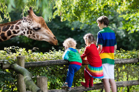 Group of children, school student, little toddler boy and preschool girl watching and feeding giraffe animals at the zoo on sunny summer day. Wildlife experience for kids at animal safari park.