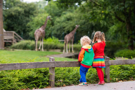 animal watching: Two children, little toddler boy and preschool girl, brother and sister, watching giraffe animals at the zoo on sunny summer day. Wildlife experience for kids at animal safari park.