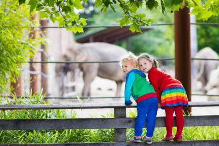safari animal: Two children, little toddler boy and preschool girl, brother and sister, watching elephant animals at the zoo on sunny summer day. Wildlife experience for kids at animal safari park.
