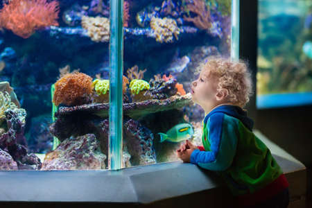 Little boy watching tropical coral fish in large sea life tank. Kids at the zoo aquarium.
