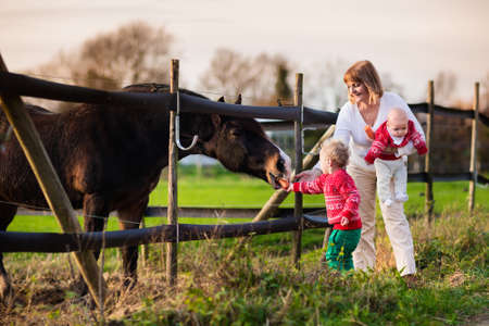 animal woman: Family on a farm in autumn. Mother and kids feed a horse. Outdoor fun for parents and children. Woman with baby and toddler playing with pets. Child feeding animal on a ranch on cold fall day. Focus on boy. Stock Photo