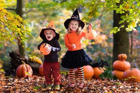 treats: Los niños llevaban trajes de la bruja negro y naranja con sombreros juega con la calabaza y la araña en otoño Parque en Halloween. truco de los niños o de placer. Chico y chica talla calabazas.