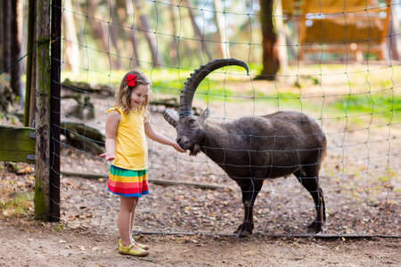 safari animal: Cute little girl in colorful dress watching and feeding wild alpine goat with large horns at the zoo on sunny summer day. Wildlife and Alps mountains nature experience for kids at animal safari park.
