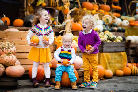 Group of little children enjoying harvest festival celebration at pumpkin patch. Kids picking and carving pumpkins at country farm on warm autumn day. Halloween and Thanksgiving time fun for family. Stock Photo