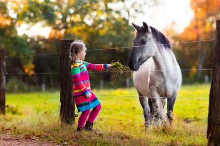 Little girl feeding a horse. Kid playing with pet horses. Child feeding animal on a ranch on cold fall day. Family on a farm in autumn. Outdoor fun for children. Фото со стока