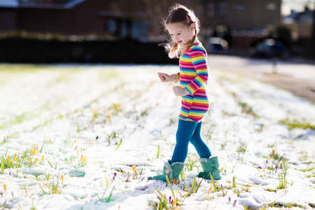 dutch girl: Cute little girl in colorful dress watching first spring crocus flowers under snow on sunny cold day. Stock Photo