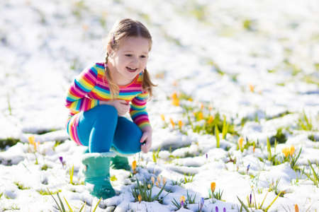 Cute little girl in colorful dress watching first spring crocus flowers under snow on sunny cold day. Фото со стока