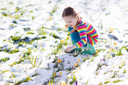 Cute little girl in colorful dress watching first spring crocus flowers under snow on sunny cold day. Stock Photo