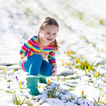 snow flowers: Cute little girl in colorful dress watching first spring crocus flowers under snow on sunny cold day. Child picking garden flower. Kid on Easter egg hunt. Family and nature fun on snowy spring day.