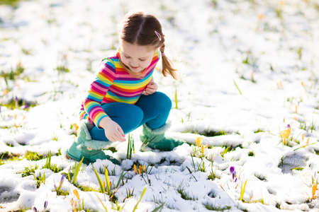 dutch girl: Cute little girl in colorful dress watching first spring crocus flowers under snow on sunny cold day. Child picking garden flower. Kid on Easter egg hunt. Family and nature fun on snowy spring day.