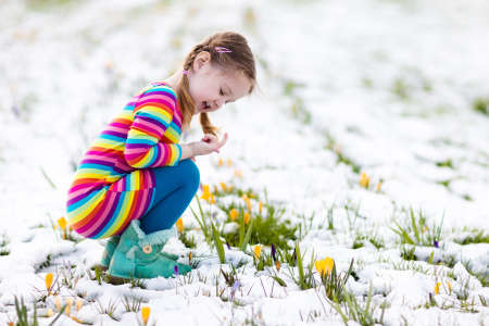 early spring snow: Cute little girl in colorful dress watching first spring crocus flowers under snow on sunny cold day. Child picking garden flower. Kid on Easter egg hunt. Family and nature fun on snowy spring day.