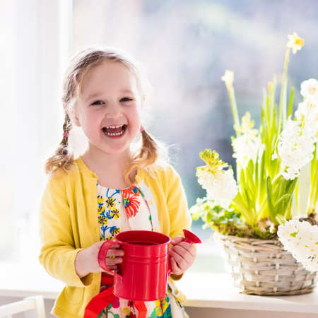 plant in pot: Cute girl watering first spring flowers. Easter home interior and decoration. Child taking care of plants. Kid with water can. Toddler with flower basket. Little gardener with hyacinths and daffodils.
