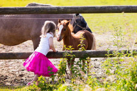 Little girl playing with mother and baby horses on sunny summer day in the country. Child feeding horse and foal pet. Kids taking care of animal pets on countryside ranch. Focus on foal.