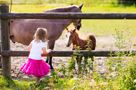 Little girl playing with mother and baby horses on sunny summer day in the country. Child feeding horse and foal pet. Kids taking care of animal pets on countryside ranch. Kids and animals friendship.