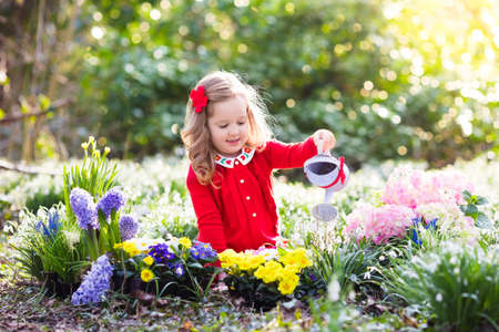 Child planting spring flowers in sunny garden. Little girl gardener plants hyacinth, daffodil, snowdrop in flower bed. Gardening tools and water can for kids. Family with children work in the backyard. Stock Photo - 72028643