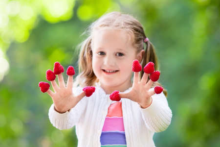 Kind Kommissionierung Himbeeren. Kinder holen frisches Obst auf Bio Himbeeren Bauernhof. Kindergartenarbeit und Ernte Beere. Kleinkind-Kind essen reifen gesunden Beeren. Im Freienfamiliensommerspaß im Land.