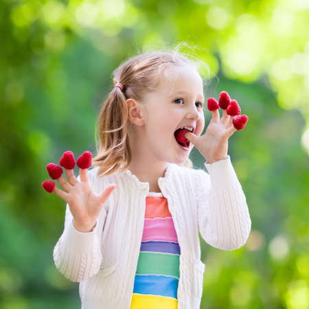 Child picking raspberry. Kids pick fresh fruit on organic raspberries farm. Children gardening and harvesting berry. Toddler kid eating ripe healthy berries. Outdoor family summer fun in the country. Stock Photo