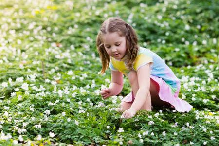Petite fille mignonne dans le jeu robe rose floraison parc printemps avec les premières fleurs anémone sauvages blanches. Enfant à la chasse aux oeufs de Pâques dans le jardin fleuri. Les enfants jouent bouquet de fleurs de cueillette en plein air. Banque d'images - 75402529