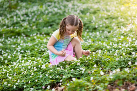 Cute little girl in pink dress playing in blooming spring park with first white wild anemone flowers. Child on Easter egg hunt in blooming garden. Kids play outdoor picking flower bouquet.