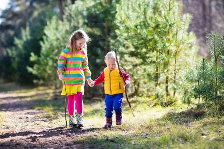 男の子と女の子のキャンプや日当たりの良い夏の森でハイキングします。子供たちは、アルプスの山々 でハイキングします。子供たちの秋のトレッ 写真素材