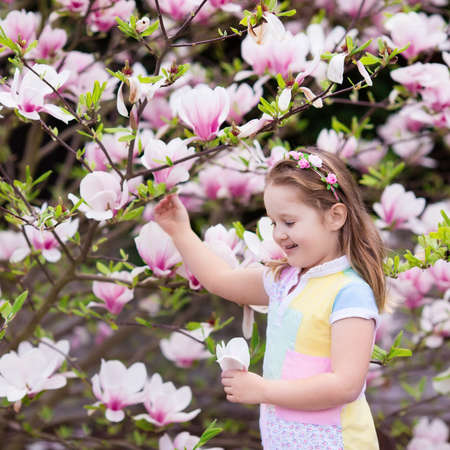 Happy little girl in pastel color dress and flower crown playing under pink magnolia tree picking big flowers in blooming spring garden. Child with magnolia blossom on Easter egg hunt. Kid gardening.