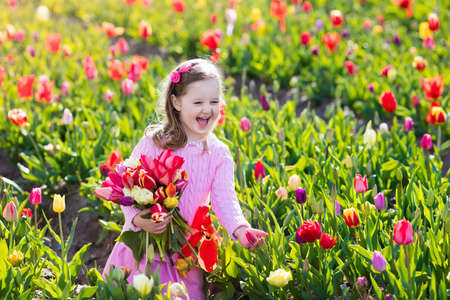 flower fields: Child in tulip flower field. Little girl cutting fresh tulips in sunny summer garden. Kid with flower bouquet for mother day or birthday present. Toddler picking red flowers in blooming spring meadow. Stock Photo