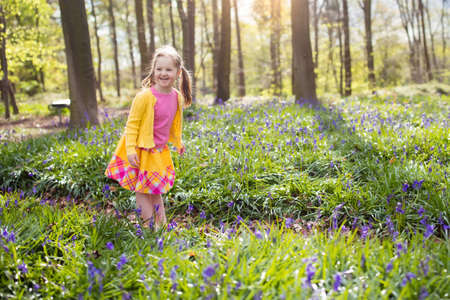 beautiful woodland: Child with bluebells. Little girl in pretty dress playing in beautiful spring forest with purple bluebell flowers. Kids hiking in park with blue bell flower meadow. Preschooler exploring nature.