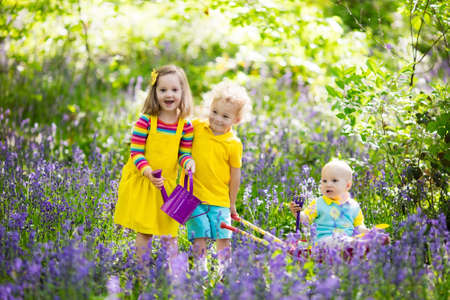 Kids with bluebell flowers, garden tools and wheelbarrow. Boy, girl and baby gardening. Children play outdoor in bluebells, work, plant and water blue bell flower bed. Family fun in summer forest. Stock Photo