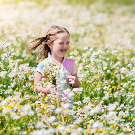 running nose: Child playing in daisy field. Girl picking fresh flowers in daisies meadow on sunny summer day. Kids play outdoors. Children explore nature. Little girl with flower bouquet for mother day or birthday.