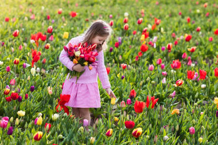 Niño en campo de flor del tulipán. Niña cortar tulipanes frescos en el jardín de verano soleado. Niño con ramo de flores para el día de la madre o regalo de cumpleaños. Niño pequeño recogiendo flores rojas en prado de primavera en flor. Foto de archivo - 77079377