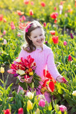 dutch girl: Child in tulip flower field. Little girl cutting fresh tulips in sunny summer garden. Kid with flower bouquet for mother day or birthday present. Toddler picking red flowers in blooming spring meadow. Stock Photo