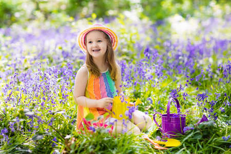 Kid in bluebell woodland. Child with flowers, garden tools and wheelbarrow. Girl gardening. Children play outdoor in bluebells, work, plant and water blue bell flower bed. Family fun in summer forest.