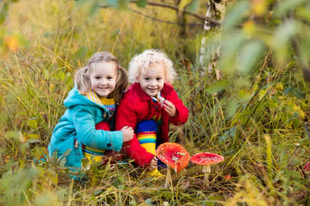 Happy laughing kids play in beautiful sunny autumn park. Little boy and girl watching toadstool mushroom in fall forest. Children hiking and playing outdoors. Preschooler learning toxic mushrooms. Zdjęcie Seryjne