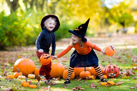 Children in black and orange witch costume and hat play with pumpkin and spider in autumn park on Halloween. Kids trick or treat. Boy and girl carving pumpkins. Family fun in fall. Dressed up child.