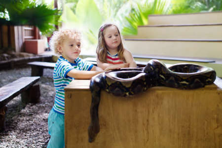 Boy and girl hold and feed huge python snake at day trip to zoo. Preschooler kid watching wild animals in terrarium. Little child holding snakes. Wildlife safari park for children. Kids with reptiles. Reklamní fotografie