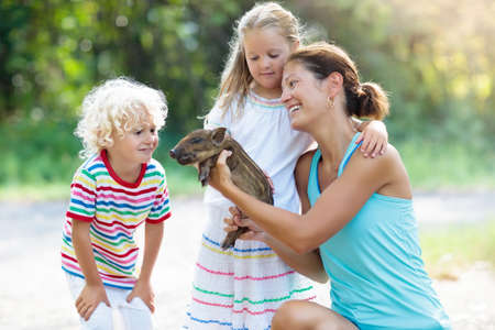 Kids play with farm animals. Child feeding domestic animal. Mother, little boy and girl hold wild boar baby at petting zoo. Kid playing with newborn pig. Children and pets. Family at farm vacation Stock Photo