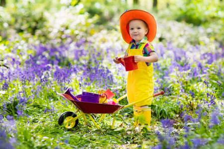 Kids in bluebell woodland. Child with flowers, garden tools and wheelbarrow. Boy gardening. Children play outdoor in bluebells, work, plant and water blue bell flower bed. Family fun in summer forest.