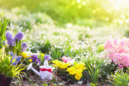 Beautiful blooming garden with flower bed on sunny spring day. Watering can, shovel, spade. Gardening tools and equipment. Planting potted flowers. Easter blossom garden and backyard decoration. Stock Photo