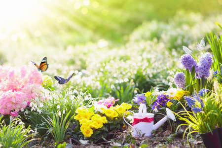 Beautiful blooming garden with flower bed on sunny spring day. Watering can, shovel, spade. Gardening tools and equipment. Planting potted flowers. Easter blossom garden and backyard decoration. Stock fotó