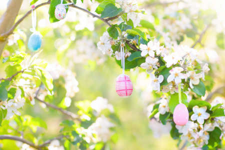 Easter egg hunt. Pastel colored eggs hanging on a cherry tree with flowers. Blooming fruit garden. Easter decoration for garden and backyard. Cherry blossom decorated for spring celebration. Banco de Imagens