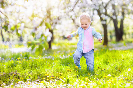 Little boy playing in blooming cherry blossom garden. Child with spring flowers in fruit orchard. Easter egg hunt in beautiful apple tree farm. Cherry flower celebration with kids. Banque d'images