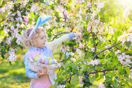 Child on Easter egg hunt in blooming cherry tree garden with spring flowers. Kid with colored eggs in basket. Little boy with bunny ears. Easter decoration, family celebration, Christian traditions.