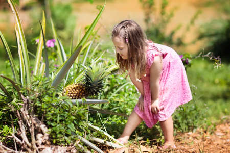 Child on pineapple fruit plantation. Little girl watching pineapples grow. Kids on fruit farm in Asia. Exotic fruits field. Pineapples orchard. Zdjęcie Seryjne