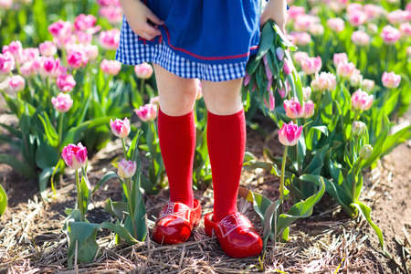 Child in tulip flower field with windmill in Holland. Little Dutch girl in traditional national costume, wooden clogs, dress and hat, with flower basket. Kid in tulips fields in the Netherlands. Stock Photo