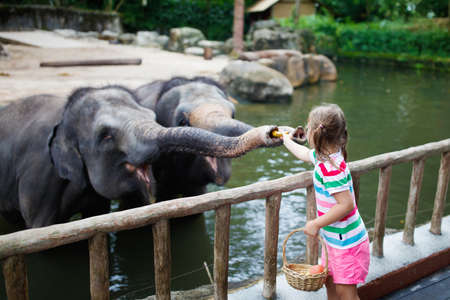 Family feeding elephant in zoo. Children feed Asian elephants in tropical safari park during summer vacation in Singapore. Kids watch animals. Little girl giving fruit to wild animal.