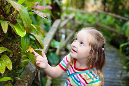 Little girl hiking in jungle. Child looking at the wild orchid in tropical rainforest. Kid walking in exotic forest with flowers. Travel with children. Borneo jungle and mountains. Kids explore nature