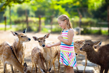 Child feeding wild deer at petting zoo. Kids feed animals at outdoor safari park. Little girl watching reindeer on a farm. Kid and pet animal. Family summer trip to zoological garden. Herd of deers. Stockfoto