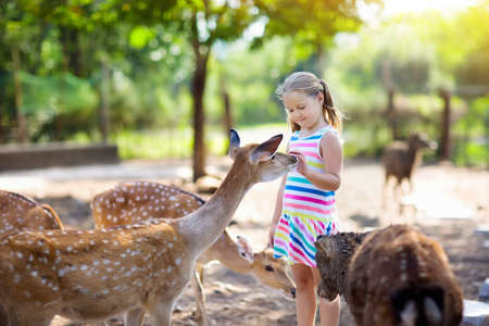 Child feeding wild deer at petting zoo. Kids feed animals at outdoor safari park. Little girl watching reindeer on a farm. Kid and pet animal. Family summer trip to zoological garden. Herd of deers. Archivio Fotografico