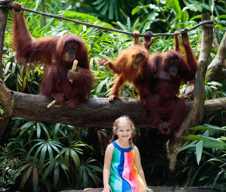 Kids watch orangutan monkeys in zoo. Little girl with orangutans in tropical safari park on summer vacation in Asia. Borneo wildlife. Kid and wild animals. Child exploring nature. Children and monkey. Banque d'images